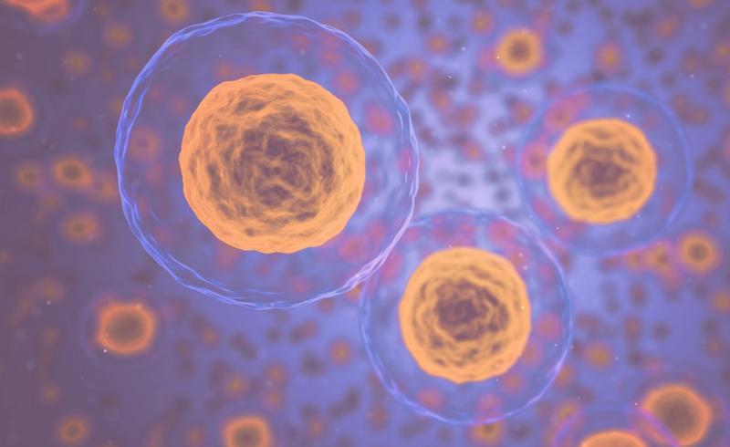 A inflamação e o câncer