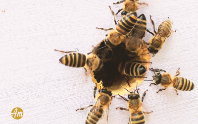 Teremos novo medicamento a partir do veneno da abelha?